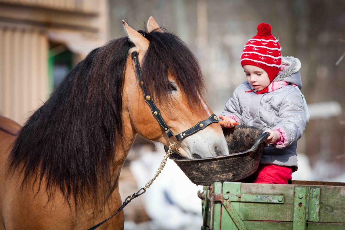 Il contatto con gli animali per crescere meglio